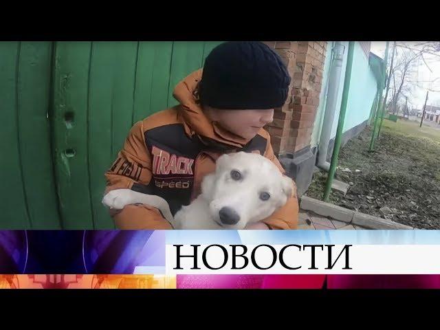 Во Владикавказе шестилетний мальчик спасает бездомных животных.
