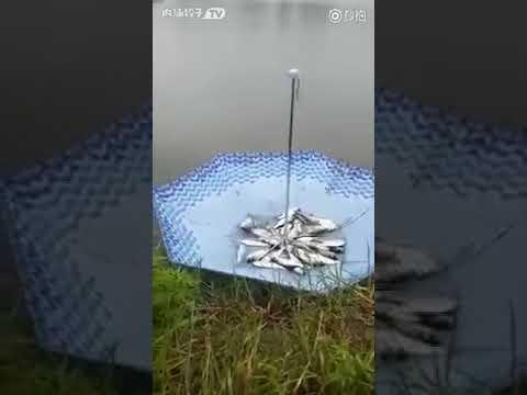 Catching Fish with Umbrella