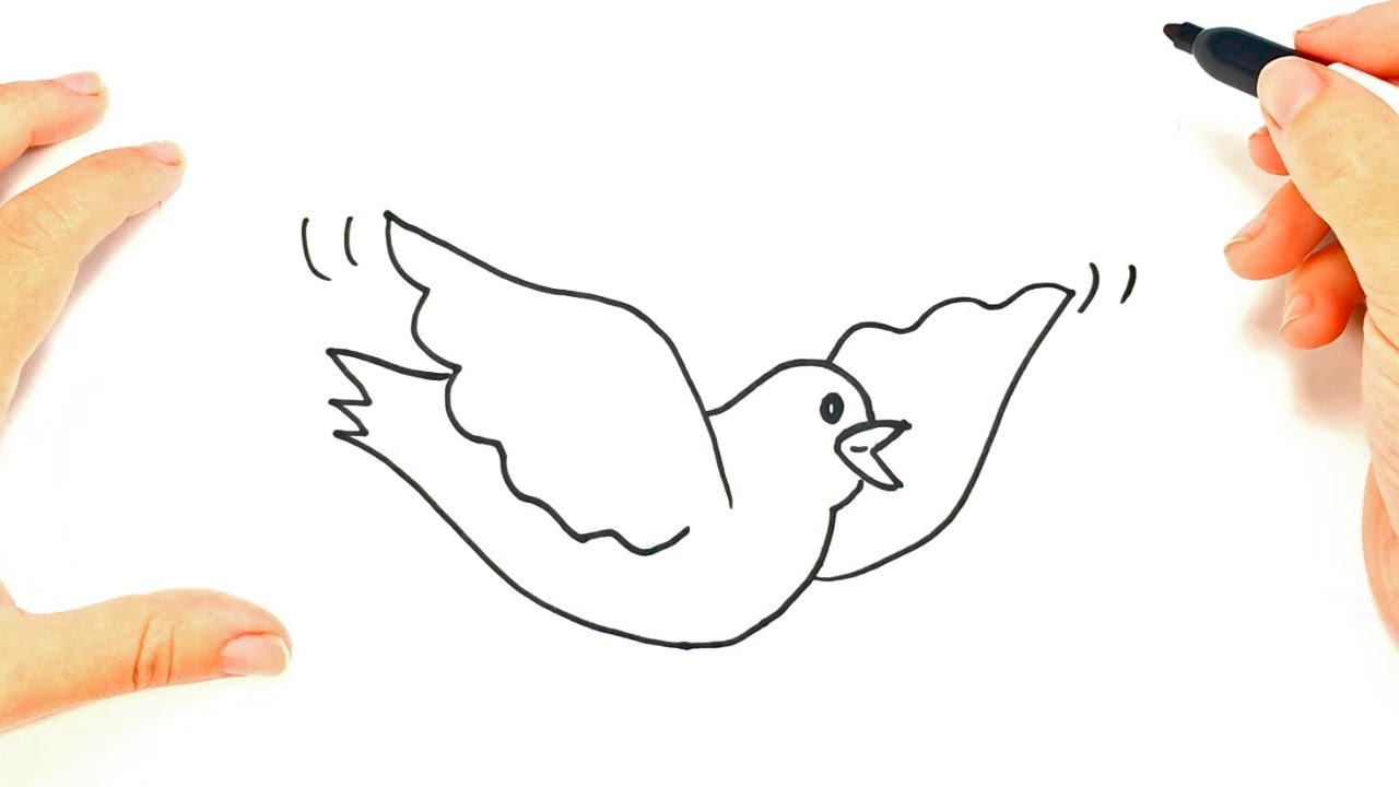 Como dibujar una Paloma paso a paso | Dibujo fácil de Paloma - YouTube