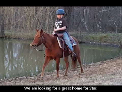 "SOLD ""Star"" 6yr 13.1h Sorrel Quarter Horse Mare - Beginner Broke"