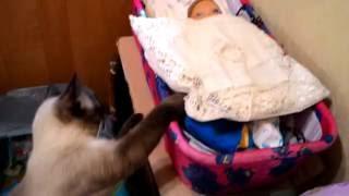 Кошка нянька/Cat sitter