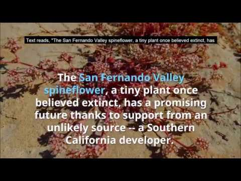 A promising future for a California plant once believed