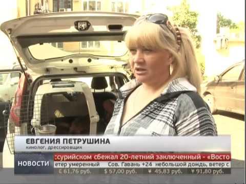 Правила провоза животных в самолете. Новости. GuberniaTV.