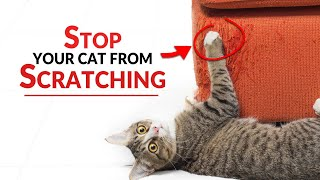 How To Prevent Cats From Scratching Furniture | Ultimate Pet Nutrition - Cat Health Tips