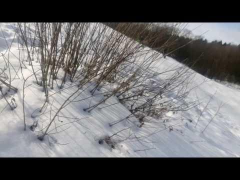 Чернево диагональ райдинг на санях и снегокатах.
