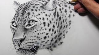 Drawing Time Lapse: Leopard