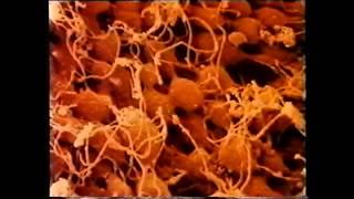 Hoe wordt sperma gemaakt?