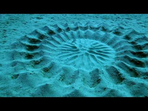 Puffer Fish Creates This Blue Water Art  ~: }