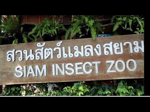 Siam Insect Zoo near Chiang Mai, Thailand