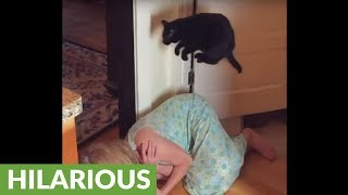 Super slow motion captures cat's jumping abilities