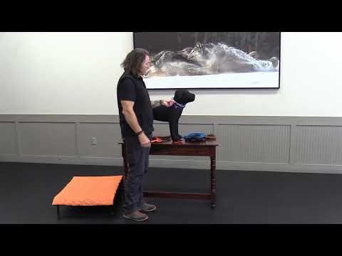dog-training-equipment