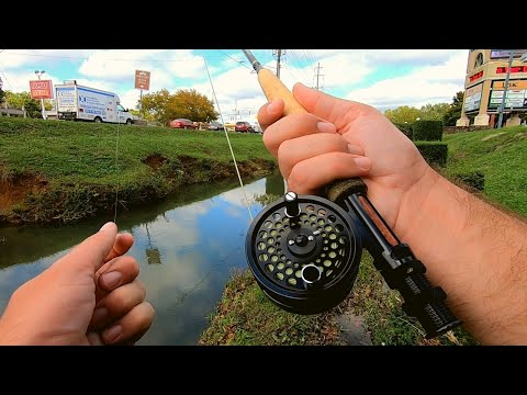 Top Water Fly Fishing Urban Ditch For ANYTHING