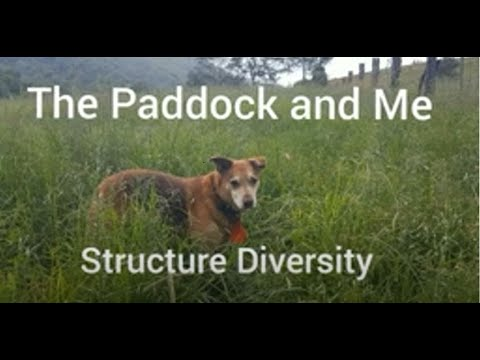The Paddock and