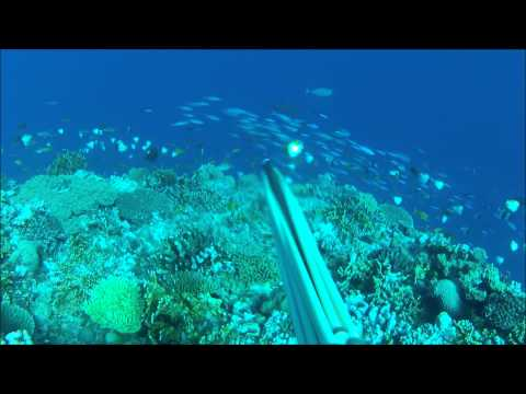 BLUE WATER HUNTING IN THE SOUTH OF NEW CALEDONIA II .wmv