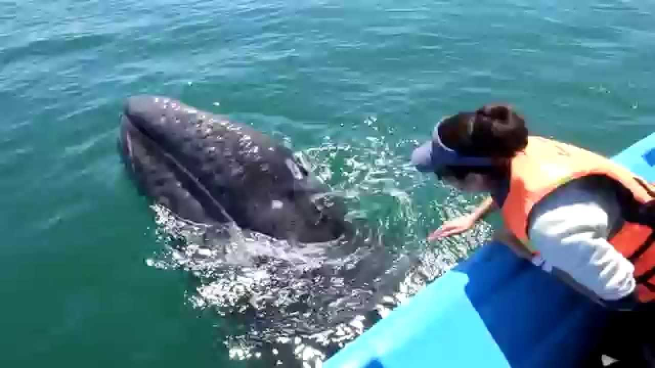 friendly whales youtube
