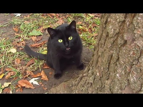 Black cat meows under a tree