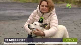 В Салехарде появятся собаки с жёлтыми бирками в ушах