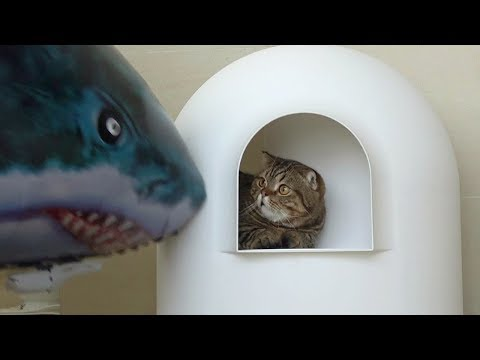 공룡보다 더 무섭고