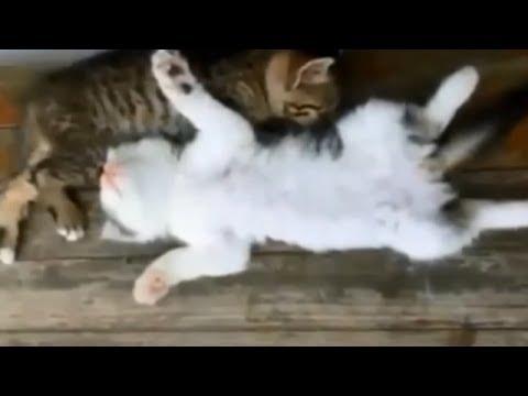 超笑えるwwwネコ動画 爪がひっかかるのに激怒するネコ