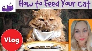 How to feed your cat properly and balance your cat's diet 🐱  cat feeding mistakes
