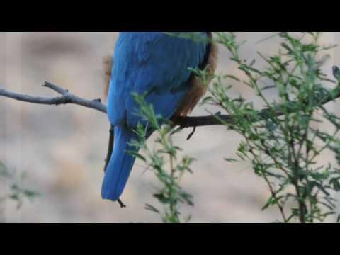 Nature Photography / India