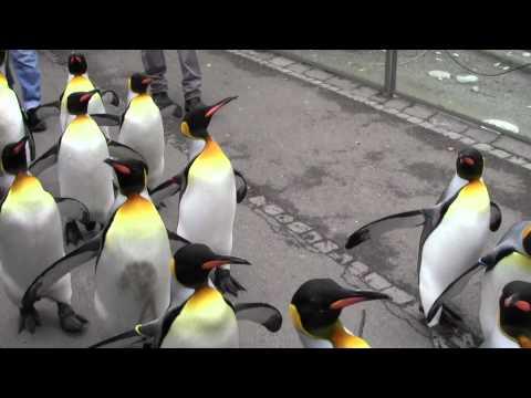 Zurich Zoo Videos part 2 ramgayu