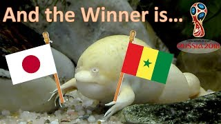 World Cup Russia 2018. The Guessing Frog. Japan v Senegal