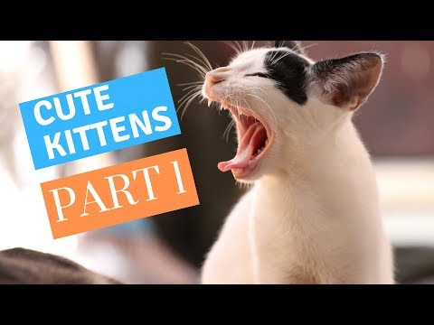 ❤ Cute Kittens Compilation ❤ -  (Part 1)