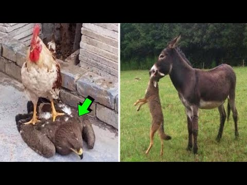Случаи Когда Хищник и Жертва Поменялись Местами Снятые на Камеру - Видео онлайн
