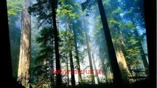 Glued Laminated Timber