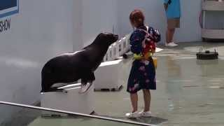 2013年夏、品川水族館で、さかなクンのギョギョンパ音頭で踊るアシ...