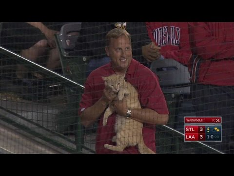 Cat gets loose on the field at Angel Stadium