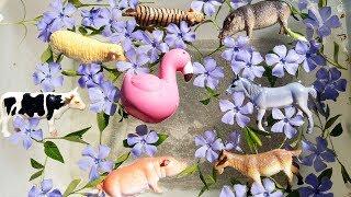 ДОМАШНИЕ ЖИВОТНЫЕ превращаются в ДИКИХ ЖИВОТНЫХ  Учим название животных на английском языке