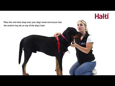 How to fit the Halti Front Control Harness