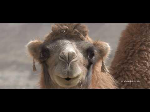 Silk Road - China - Impressions
