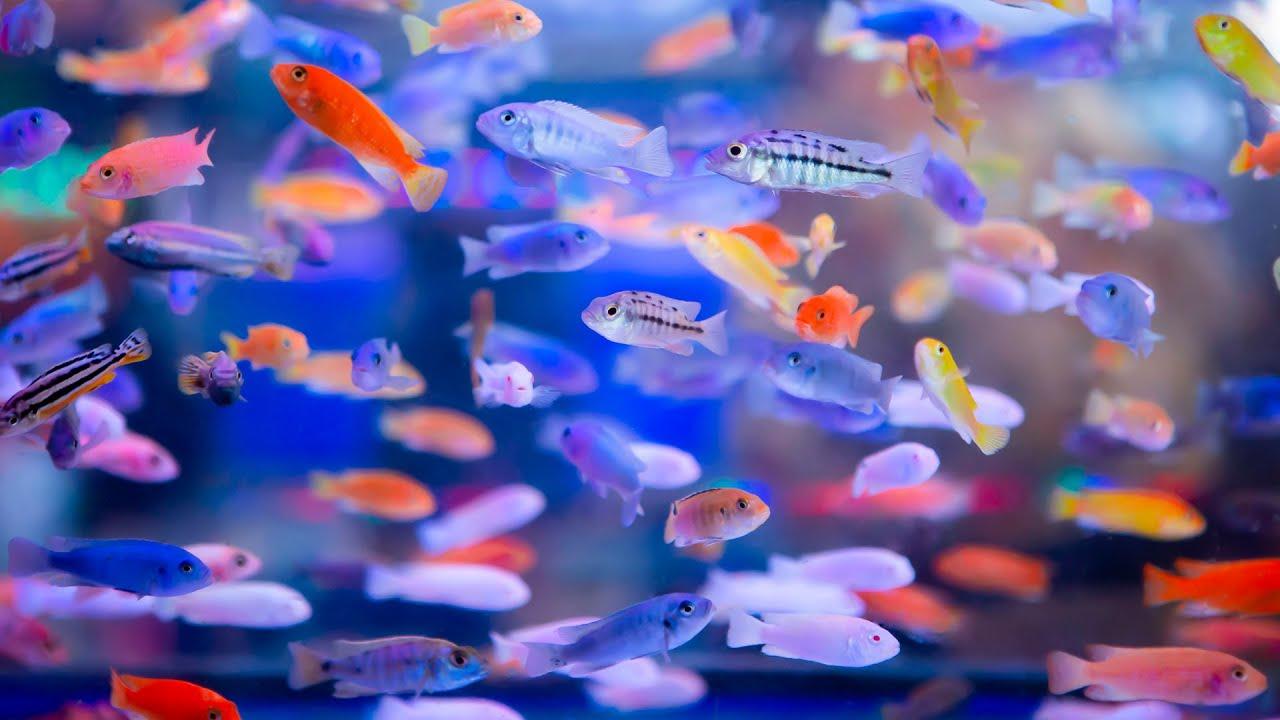 Breeding Fish For Profit Part 5 - Q & A