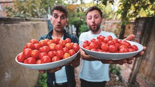 PICKING & COOKING SUPER FRESH TOMATOES! 🍅