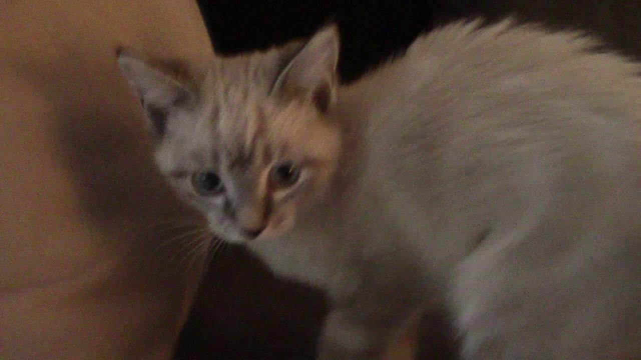 mackrel tabby cat