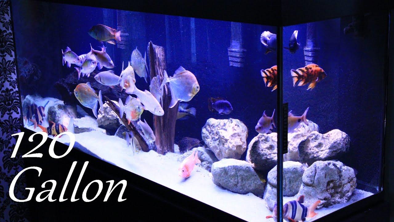 120 Gallon Fish Tank - YouTube