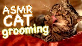 ASMR Cat - Grooming #12