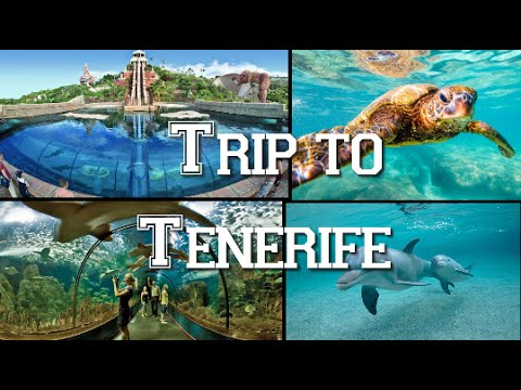 Trip to Tenerife. Loro Park, Siam Park, Turtles, Dolphins and Cetaceans