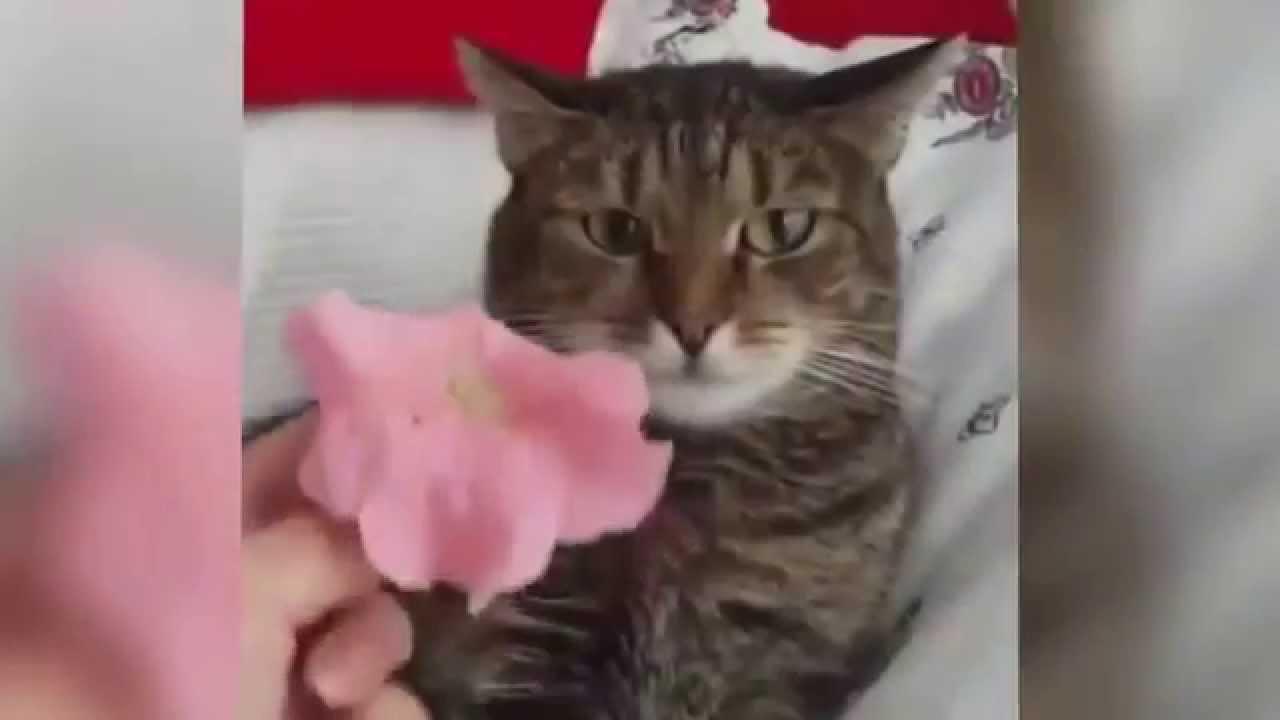 Кот боится букета цветов видео