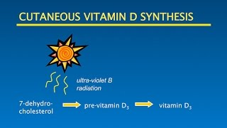 Vitamin D Sunshine Optimal Health: Putting it all Together