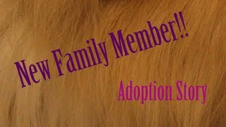 New Fluffy Family Member! Adoption Story :)