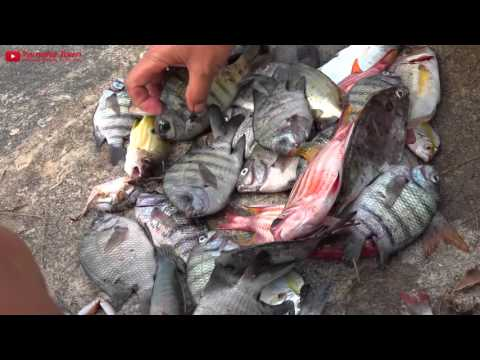 Marine fish are dying in Ha Tinh, in Vietnam's