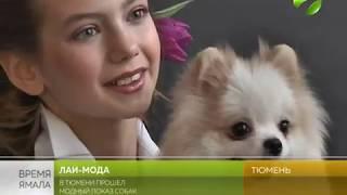 Лай-мода. В Тюмени устроили  дефиле собак