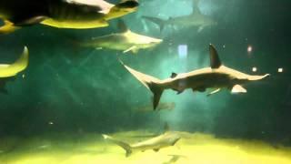 サメ&エイ 葛西臨海水族園