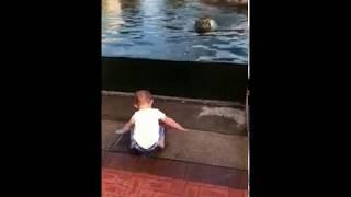 Тигр хотел напугать ребенка