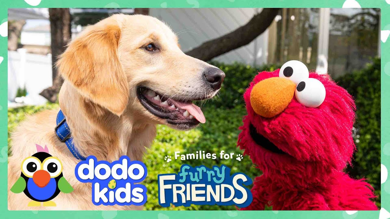 Elmo Helps The Most Energetic Shelter Dog Find Perfect Forever Family With Dodo Kids + Sesame Street