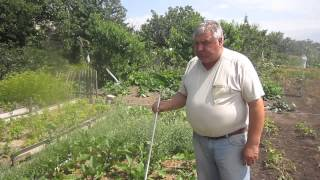 Баклажаны без полива(Баклажаны под соломой, хороший урожай в засуху., 2015-07-03T13:25:23.000Z)